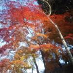 仏舎利塔の紅葉もチェック