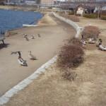 千波湖周囲を散策
