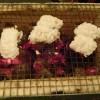 京懐石 螢で夕食