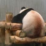 上野動物園 東園、パンダとご対面