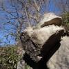 筑波山 御幸ヶ原から女体山を目指す