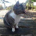景信山山頂から小仏峠経由し、小仏城山へ、猫のお出迎え