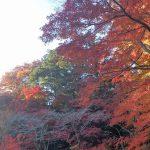 京王高尾山温泉 極楽湯で温泉につかる、紅葉シーズンの込み具合チェック
