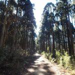 桃源台から九頭龍神社へ徒歩での行き方