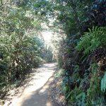 獅子岩駅から弥山山頂目指してハイキング